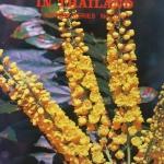 ดอกไม้ในเมืองไทย Vol.11
