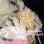 สไตล์สาวเกาหลีTB531 : Hiso Fur : ใหม่! เฟอร์คลุมไหล่ลายเสือพาดกลอนเพิ่มความหรู ลุคสาวเกาหลีพร้อมเข็มกลัด ผูกโบซาตินด้านในบุอย่างดีด้วยซาติน  thumbnail 2