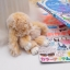 พวงกุญแจห้อยกระเป๋า ตุ๊กตากระต่ายหูยาว น่ารักๆๆ ขนกระต่ายแท้ นุ่มมากๆ thumbnail 18