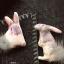 กระต่ายยืน thumbnail 1