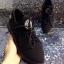 รูปรองเท้าแบรนด์เนมสำหรับPreorderสวยๆแบบใหม่ๆค่ะ thumbnail 279