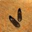 รูปรองเท้าแบรนด์เนมสำหรับPreorderสวยๆแบบใหม่ๆค่ะ thumbnail 655