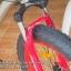 จักรยาน FATBIKE รุ่น ROCKER 1 BY GIANT thumbnail 3