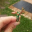 แหวนพญานาคพลอยนพเก้า thumbnail 1