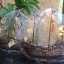 เรือสำเภา เป็นเคล็ดลับที่บูชา แล้วเจริญรุ่งเรืองแบบทวีคูณ ไม้พยุง ไม้สักและไม้เจริญสุข ทั้ง 3 เนื้ออยู่ในเรือรำเดียวกัน ไม้นี้ครบครอบจักรวาลค่ะ จะช่วยเรื่องพยุงธุรกิจการค้า มีอำนาจบารมี มีศักดิ์ศรีมีความสุข มั่งคั่งร่ำรวย ซึ่ง เรือสำเภาจีนแต้จิ๋วนี้จะ อ้ว thumbnail 3