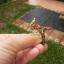 แหวนพญานาคพลอยนพเก้า thumbnail 2