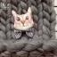 แมวผูกโบว์ thumbnail 1