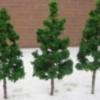 ต้นไม้จิ๋ว ขนาด 6.5 ซ.ม. 10 ต้น