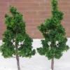 ต้นไม้ สูง 5 ซ.ม. 10 ต้น