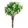 ต้นไม้จิ๋ว ขนาด 7 ซ.ม. (แพ็ค 2 ต้น)