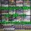 แยกแคลน CMB-01 (ลิงค์โจ๊กเกอร์) thumbnail 2