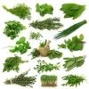 ประโยชน์ของพืชสมุนไพร ดีอย่างไร