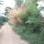 ขายบ้านไม้สัก 3หลัง พื้นที่ 10 ไร่ บางไทร อยุธยา thumbnail 9