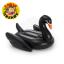 Black Swan thumbnail 1